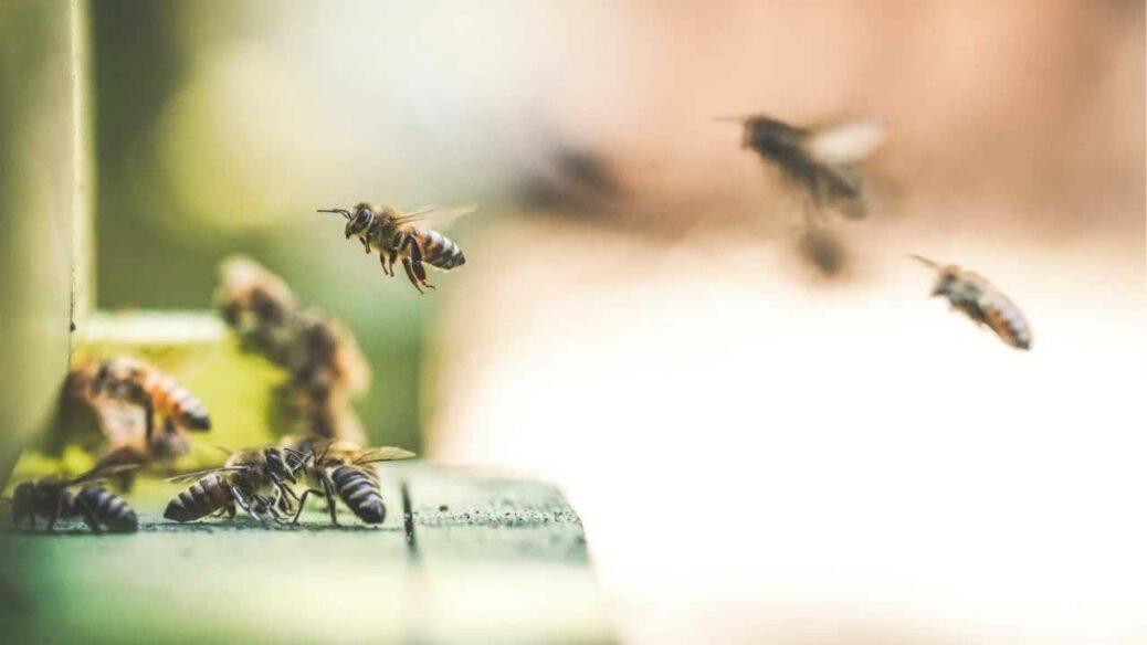 Häagen-Dazs Celebrates Free Cone Day To Protect Bees!